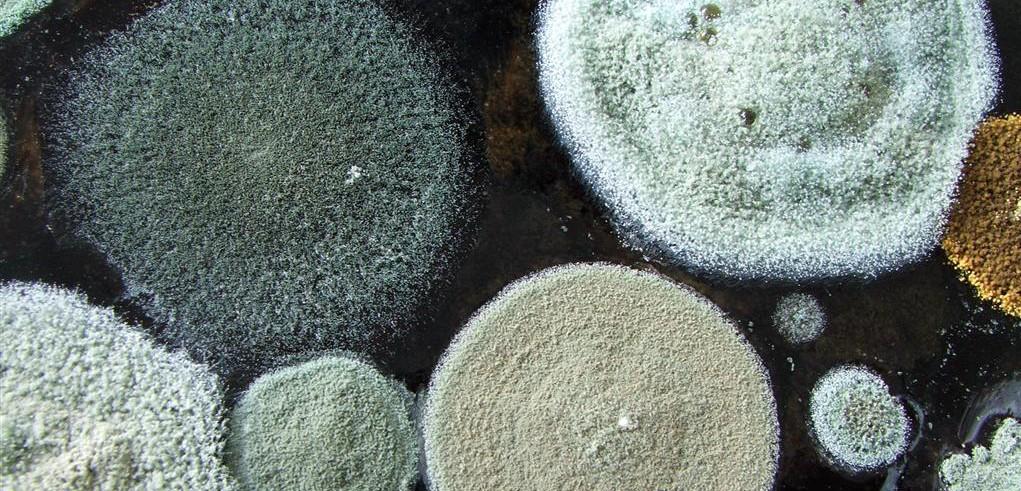 Озонирование — удаление запахов, бактерий, грибка в Уфе
